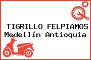 TIGRILLO FELPIAMOS Medellín Antioquia